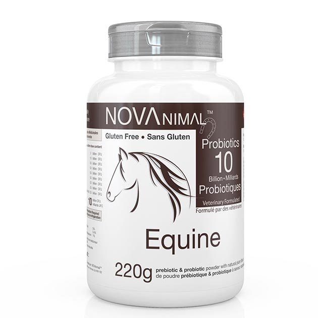 Equine Probiotics. High levels of beneficial gut bacteria are important for digestive health.